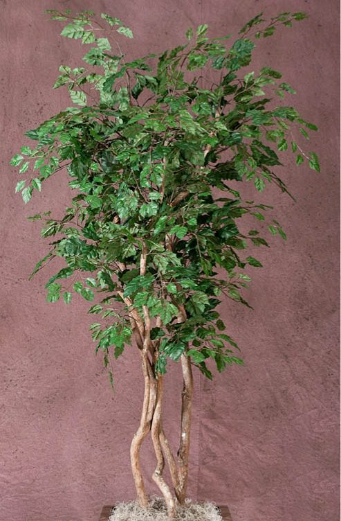 Danica Oak Tree