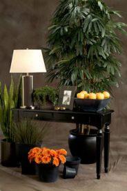 Silk Plant Variations